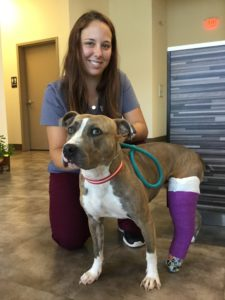 dog hit by a car with broken leg