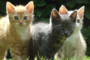 kittens-1177693(3 to 2 aspect)